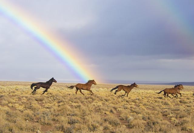 虹がかかった背景で4頭の馬が連なって草原を走る風景