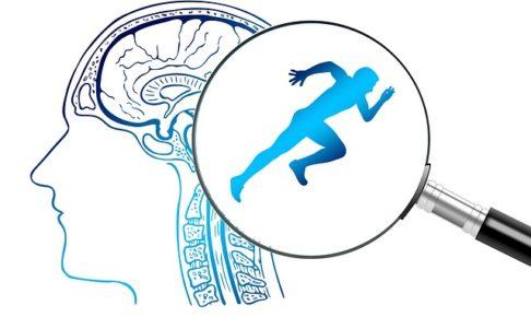 透けて見える人間の脳に虫眼鏡で覗くと走るランナーが見えるイメージイラスト